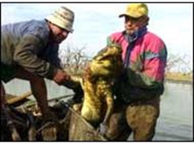 80 kişiyi yiyen timsah yakalandı